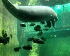 Zdjęcie dla Wrocław Afrykarium oceanarium ogród zoo ul. Wróblewskiego 1-5