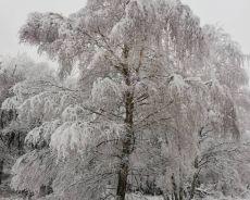 Zdjęcie dla Strzelce Opolskie zima 2019 r.