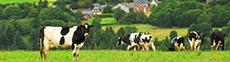 Agroturystyka wiejska